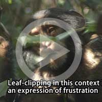 Leaf-clipping