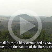 The forest of Bossou