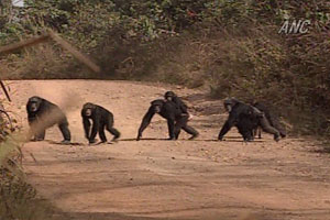 The habitat of the chimpanzees and the village
